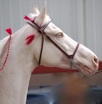 Reiki horse